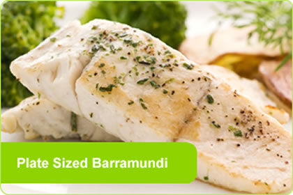 Plate Sized Barramundi