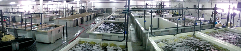 Fish Farming Technology Including Filters Tanks Ozone
